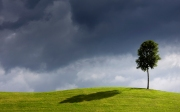 Wallpaper-tree-wind-sky-field-pictures